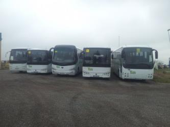 Fleet of buses front view