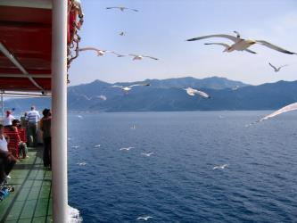 Ferry with Seagulls